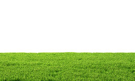 Green grass. Isolated on white background. 3d illustration Stock Image