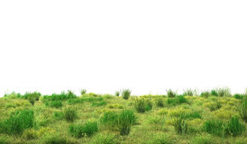 Green grass isolated on white background. 3d illustration Stock Images