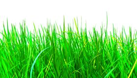Green grass, 3d illustration stock photography