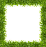 Green grass isolated on white background. Stock Images
