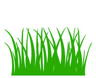 Green grass isolated on white background. Illustration of green grass, green leaves isolated on white background Stock Image