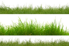 Green grass isolated on white background. Green grass isolation on the white backgrounds Stock Images
