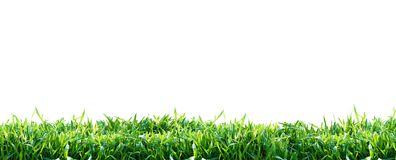 Green grass isolated on white background. Natural background royalty free stock photo