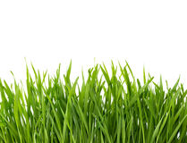 Green grass isolated on white background. royalty free stock images