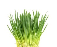 Green grass isolated on white background. Side view.  Stock Image