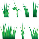Green Grass. Isolated On White Background, Vector Illustration Stock Photo