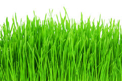 Green grass isolated on white background. Royalty Free Stock Photo