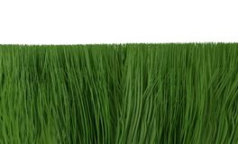 Green grass isolated on white 3d illustration. Green grass isolated on white background 3d render Stock Images