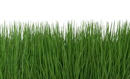Green grass isolated on white 3d illustration. Green grass isolated on white background 3d render Stock Photography