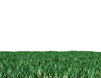 Green grass isolated on white illustration Royalty Free Stock Image