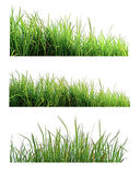 Green Grass isolated on white nature background Royalty Free Stock Photo