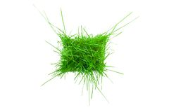 The green grass. Stock Images