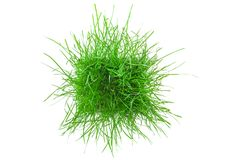 The green grass. The green grass isolated on white. Top view Stock Photo