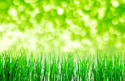 Green grass. Isolation on the white backgrounds Stock Image