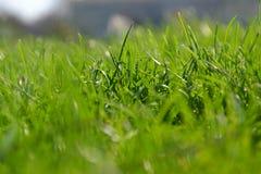 Green grass. Juicy green grass in macro photography Stock Photos