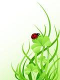 Green grass and ladybird Royalty Free Stock Photos