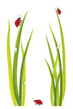 Green grass and ladybugs Royalty Free Stock Image