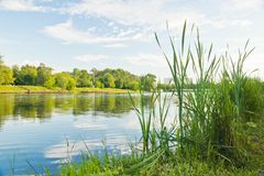 Grass on the lake shore in summer Royalty Free Stock Photography