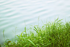 Grass and lake Stock Images