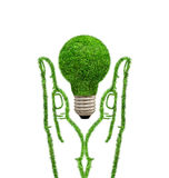 Green grass lamp in hands. Royalty Free Stock Photo