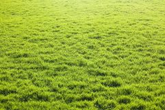 Green grass land Stock Image