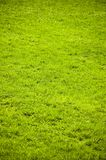 Green grass land Royalty Free Stock Image