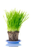 Green grass with the land Royalty Free Stock Photo