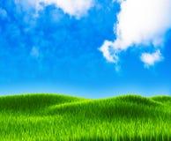 Green grass landscape Royalty Free Stock Photo