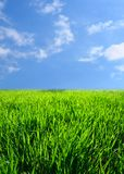Green grass landscape Stock Image