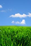 Green grass landscape Royalty Free Stock Photo