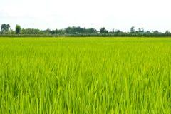 Green Grass landscape Stock Photo