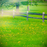 Green grass landscape Royalty Free Stock Image