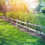 Green grass landscape Royalty Free Stock Images