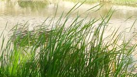 Green grass landscape on the river stock footage