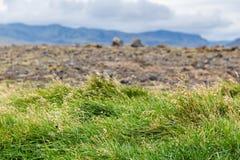 Green grass and lava field in Iceland. Travel to Iceland - green grass and lava field on Dyrholaey peninsula, near Vik I Myrdal village on Atlantic South Coast royalty free stock photos