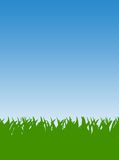 Green Grass lawn Royalty Free Stock Image