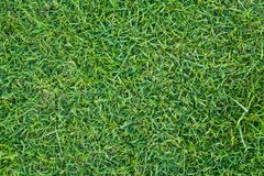 Green grass lawn Royalty Free Stock Photos