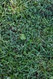 Green grass lawn background with dew drops Stock Photo