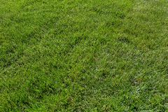 Green Grass Lawn Background Royalty Free Stock Photography