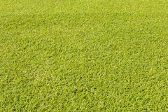 Green grass lawn for background Royalty Free Stock Images