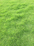 Green grass lawn background Royalty Free Stock Photo