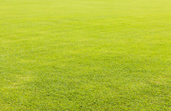 Green grass lawn for background Stock Images