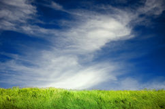 Green grass lawn and blue sky with light clouds Royalty Free Stock Image