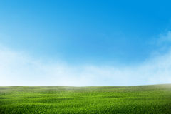 Green grass lawn with blue sky and mist Royalty Free Stock Photo