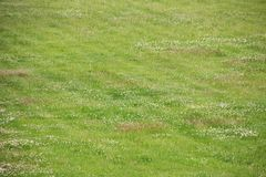 Green grass on the lawn close up, background. Or texture stock images