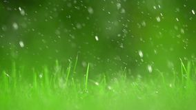 Green grass lawn and falling raindrops, shallow DOF. Super slow motion video, 500 fps. Grass lawn and falling drops of water, shallow focus. Super slow motion
