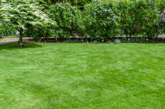 Green grass lawn and garden Royalty Free Stock Photography
