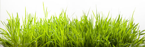 Green grass for lawn gresh isolate Stock Photos