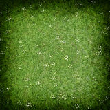 Green grass lawn Stock Photo