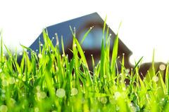 Green grass on a lawn about the house Royalty Free Stock Photo